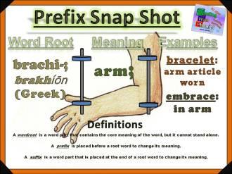 brachi-prefix-snap-shot