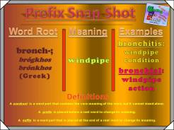 bronch-prefix-snap-shot