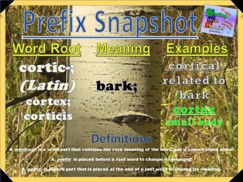 cortic- Prefix Snapshot [Autosaved] [Autosaved]